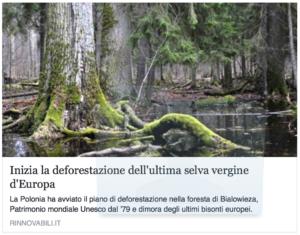 la foresta vergine tedesca sta sparendo? la nostra è già scomparsa da tempo