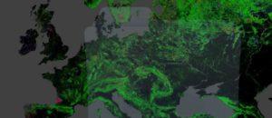Foresta, bosco e albero: non li amiamo