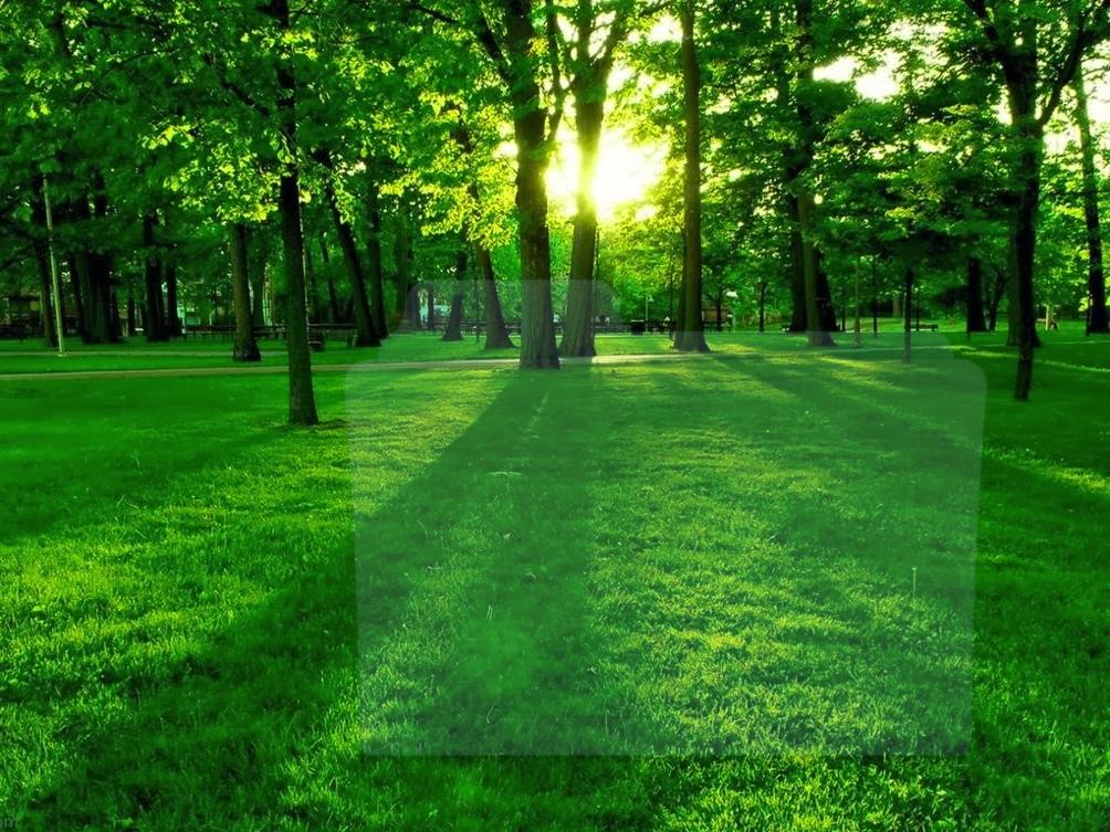 verde calma armonia serenità ossigeno