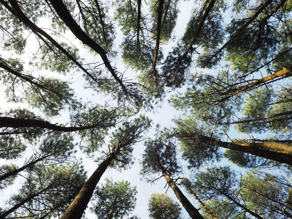 Lo senti anche tu che stai già meglio? Basta la vista di alcuni alberi e il nostro organismo, avido di ossigeno, già si prepara a respirare più lentamente e profondamente.